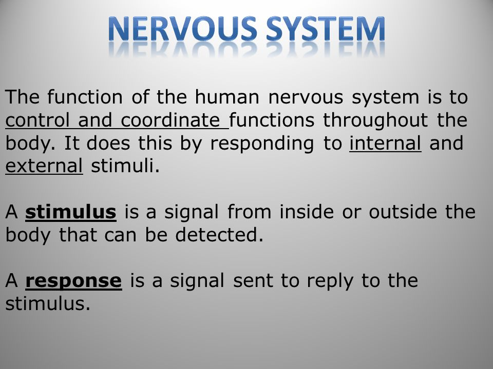 51 The function of the human nervous system is to control and coordinate functions throughout the body.