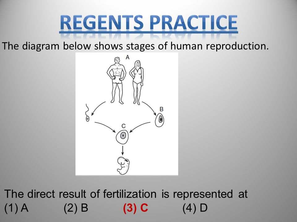 82 The diagram below shows stages of human reproduction.