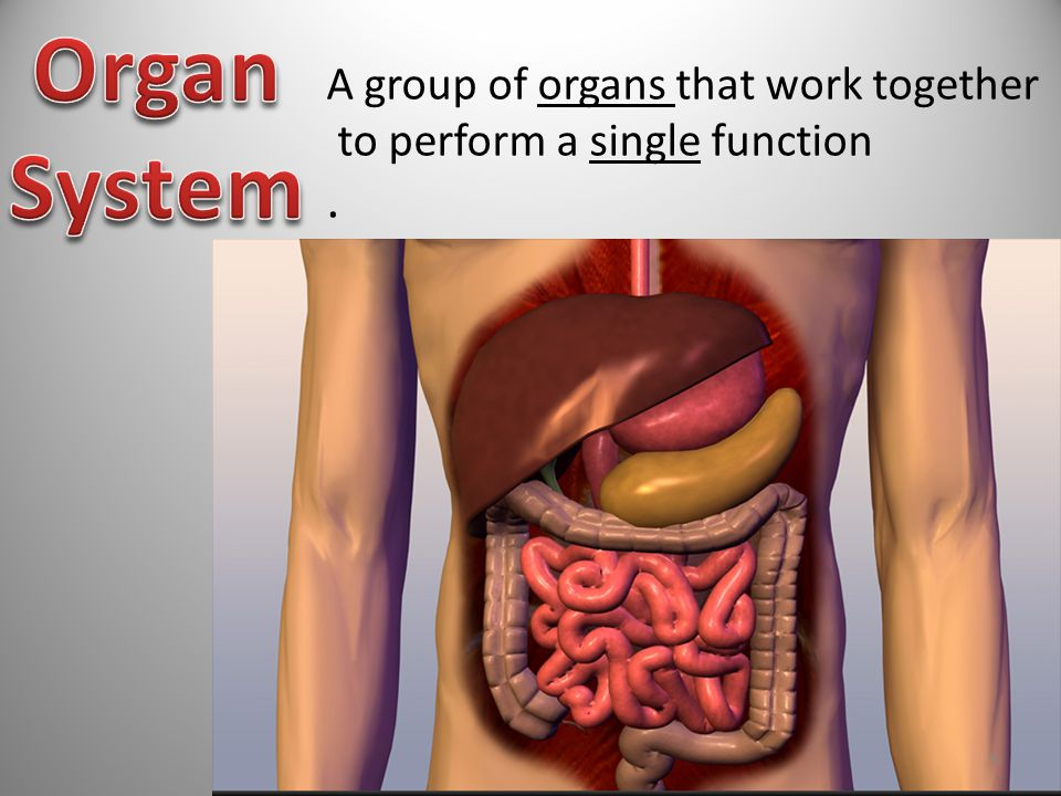 A group of organs that work together to perform a single function. 9