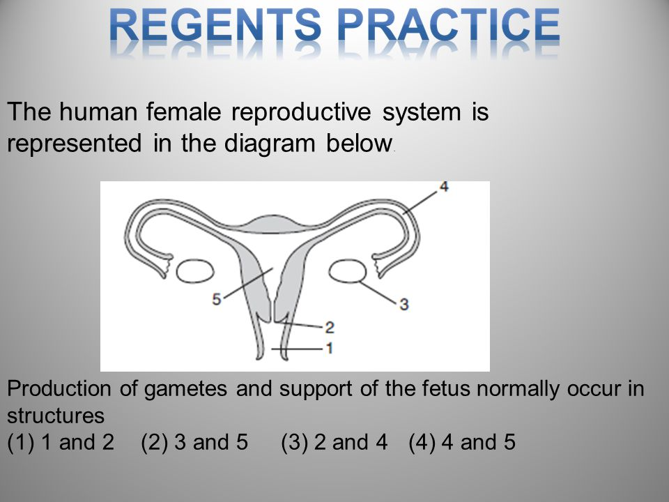 91 The human female reproductive system is represented in the diagram below.