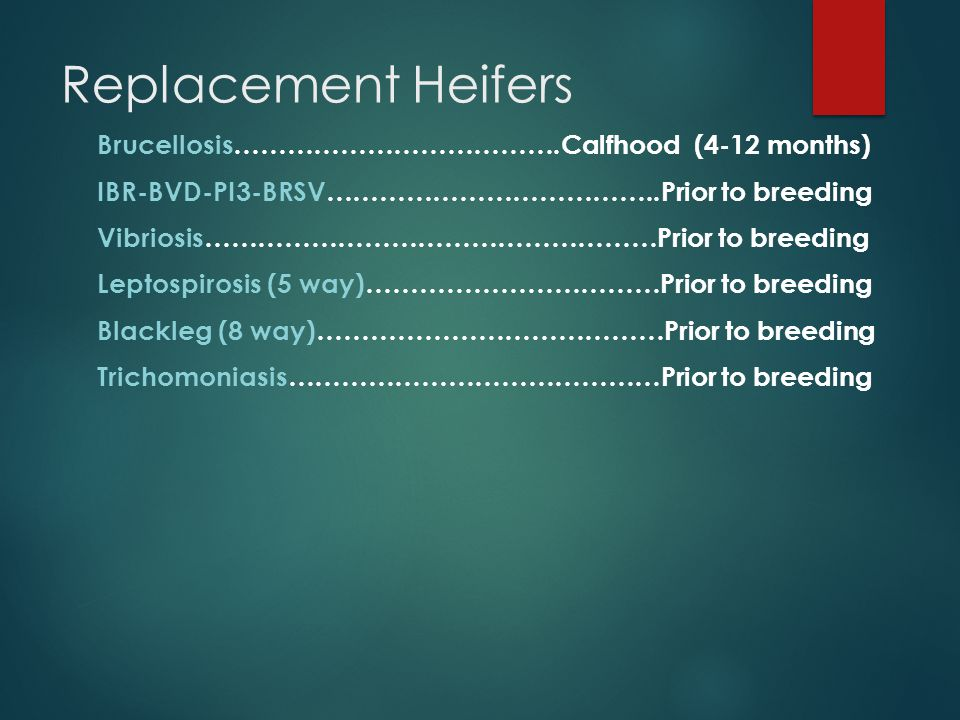 Replacement Heifers Brucellosis……………………………….Calfhood (4-12 months) IBR-BVD-PI3-BRSV………………………………..Prior to breeding Vibriosis……………………………………………Prior to breeding Leptospirosis (5 way)……………………………Prior to breeding Blackleg (8 way)…………………………………Prior to breeding Trichomoniasis……………………………………Prior to breeding