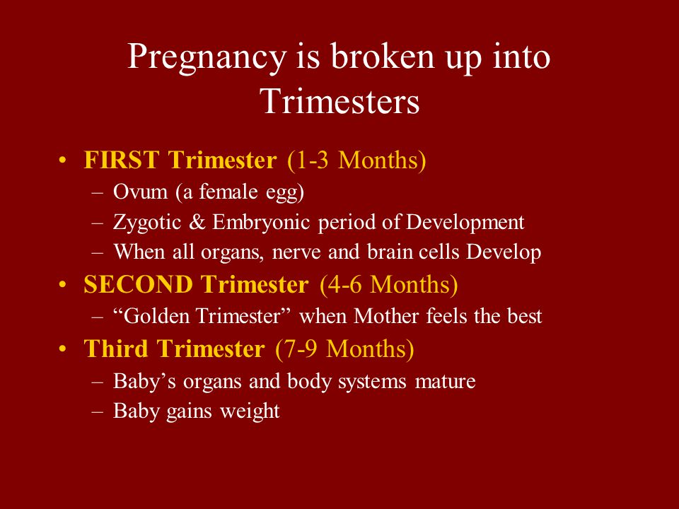 Pregnancy is broken up into Trimesters FIRST Trimester (1-3 Months) –Ovum (a female egg) –Zygotic & Embryonic period of Development –When all organs,