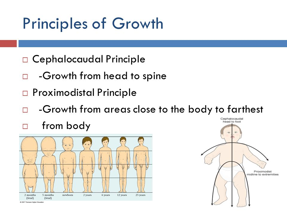 Principles of Growth  Cephalocaudal Principle  -Growth from head to spine  Proximodistal Principle  -Growth from areas close to the body to farthe