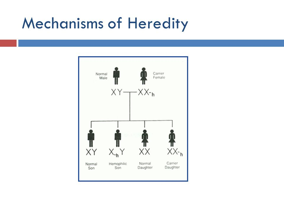 Mechanisms of Heredity