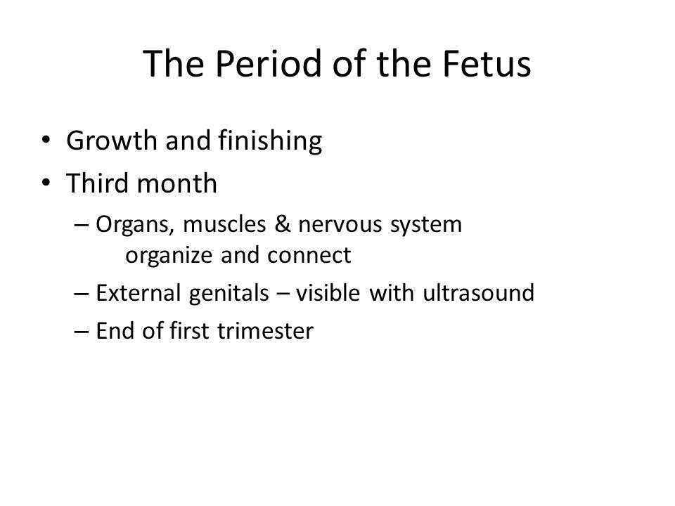 11 Week Fetus
