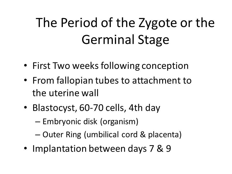 6 Gametes and Zygote Sperm Ovum Gametes (reproductive cells) FertilizationZygote Sperm