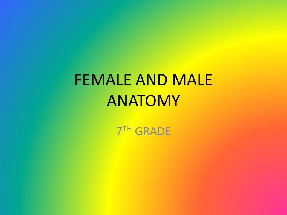 FEMALE AND MALE ANATOMY 7 TH GRADE