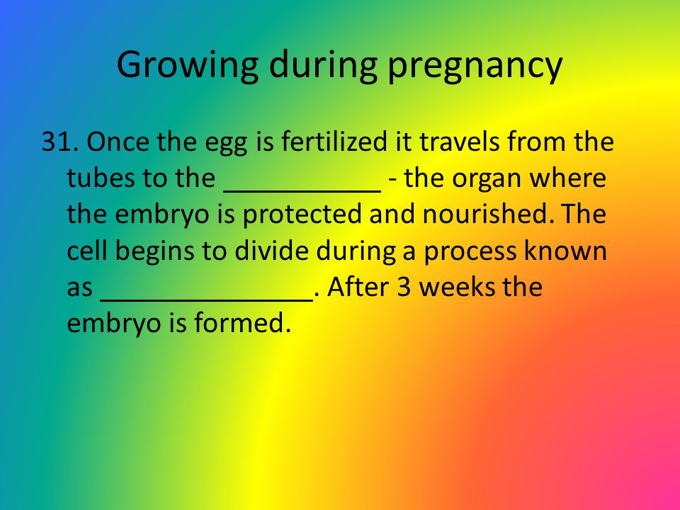 Growing during pregnancy 31. Once the egg is fertilized it travels from the tubes to the - the organ where the embryo is protected and nourished. The
