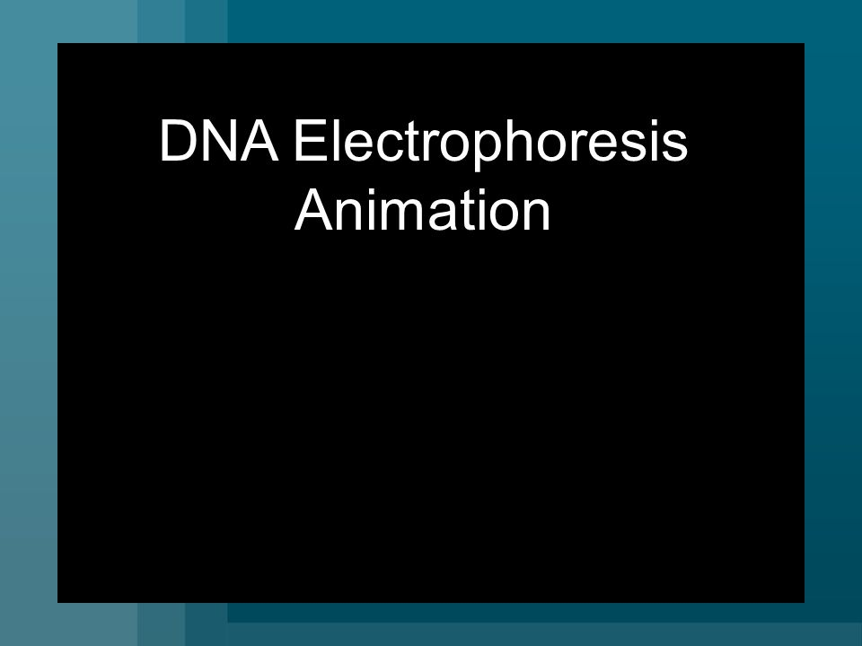 DNA Electrophoresis Animation