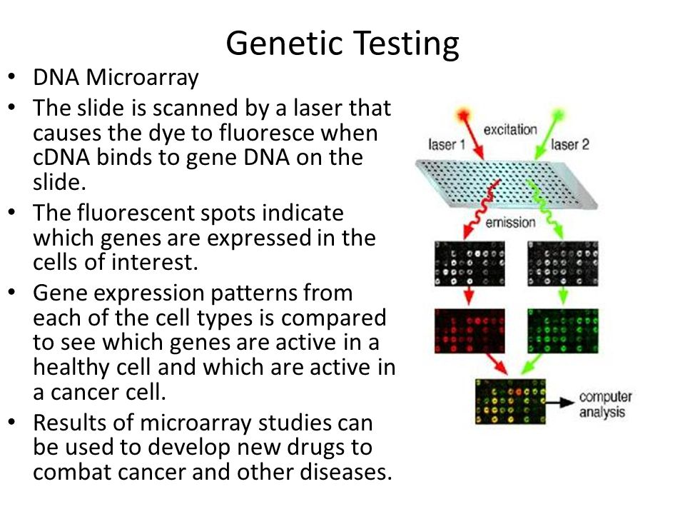 DNA Microarray The slide is scanned by a laser that causes the dye to fluoresce when cDNA binds to gene DNA on the slide. The fluorescent spots indica