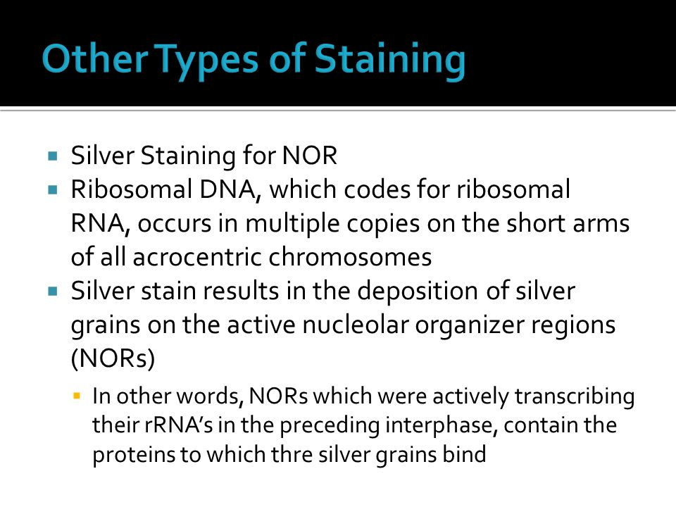  Silver Staining for NOR  Ribosomal DNA, which codes for ribosomal RNA, occurs in multiple copies on the short arms of all acrocentric chromosomes 