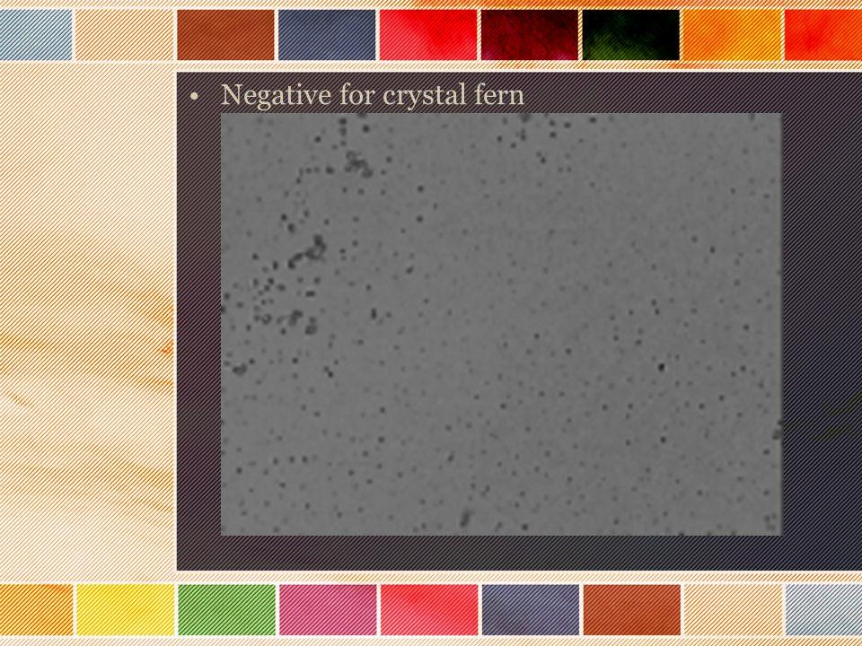 Negative for crystal fern