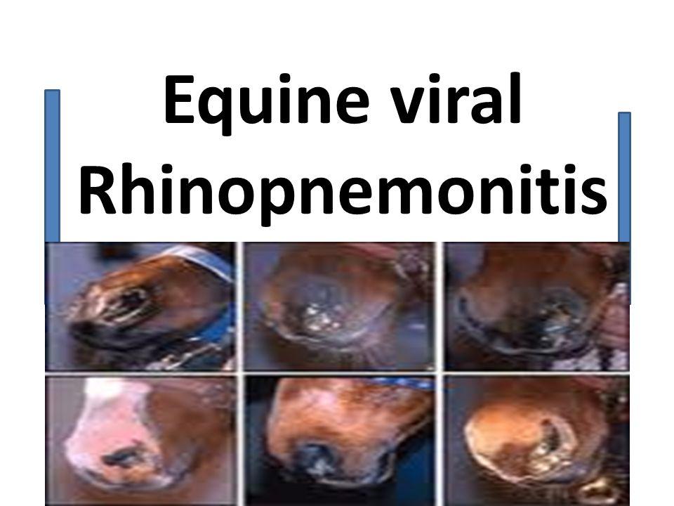 Equine viral Rhinopnemonitis