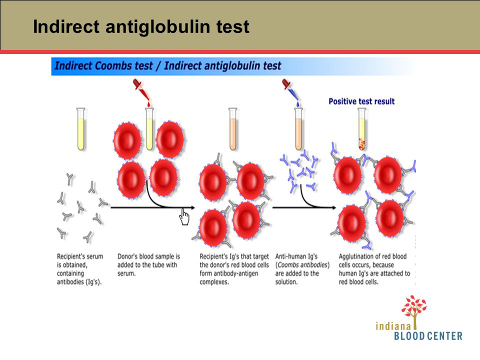 Indirect antiglobulin test