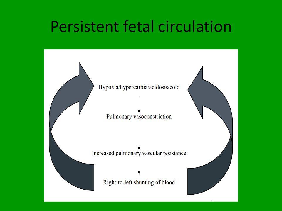 Persistent fetal circulation