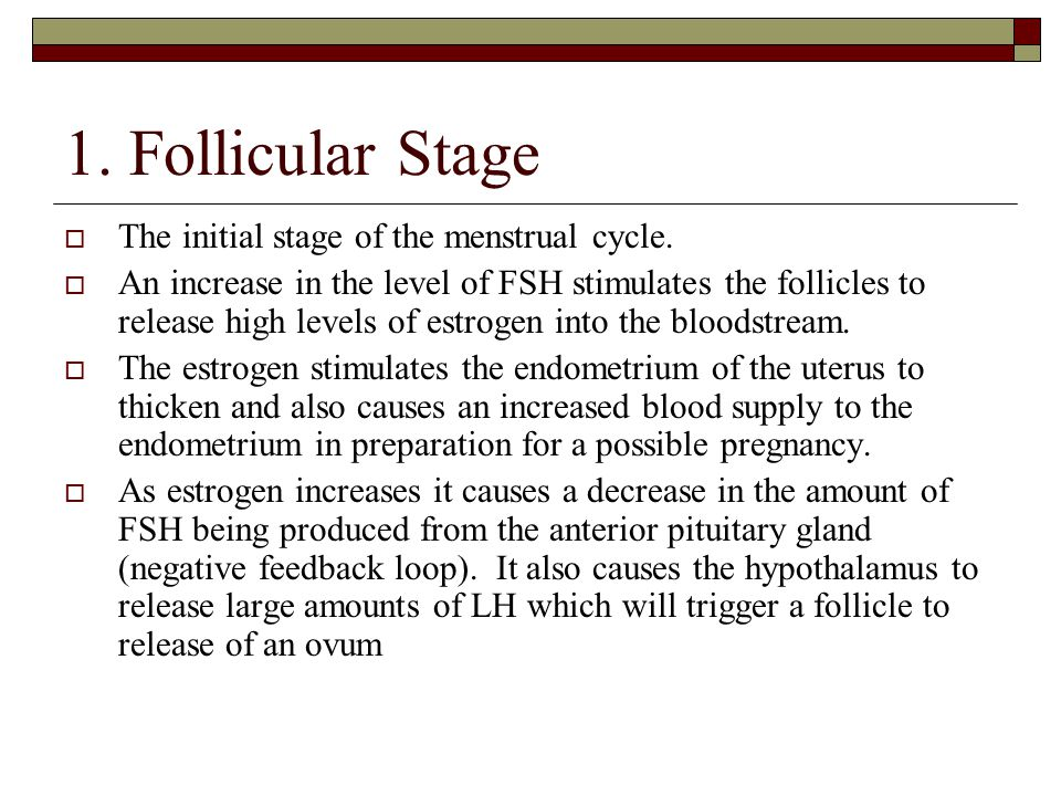 1. Follicular Stage  The initial stage of the menstrual cycle.  An increase in the level of FSH stimulates the follicles to release high levels of e