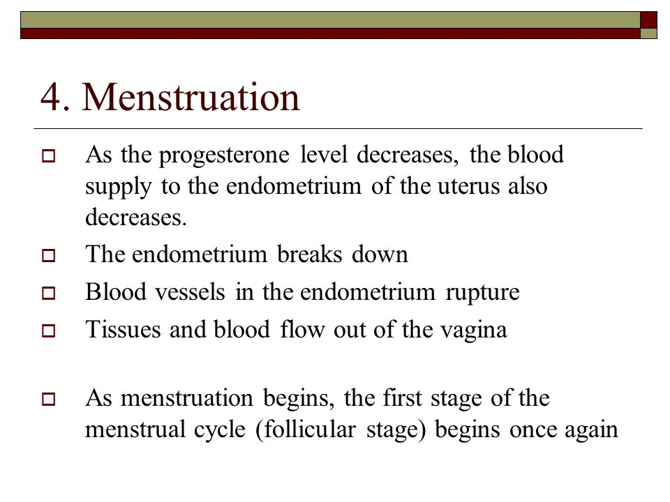 4. Menstruation  As the progesterone level decreases, the blood supply to the endometrium of the uterus also decreases.  The endometrium breaks down