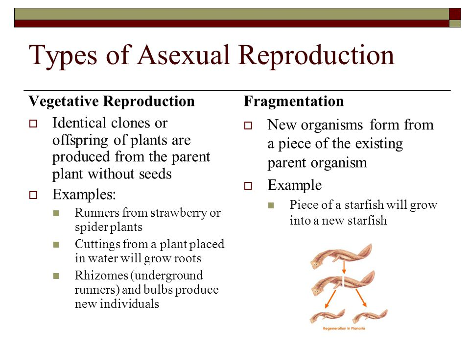 Reproductive Control  The use of technology to control reproduction is a highly controversial topic.
