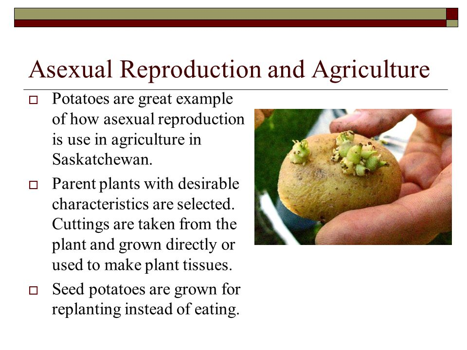 Sexual Reproduction  Humans reproduce by sexual reproduction.