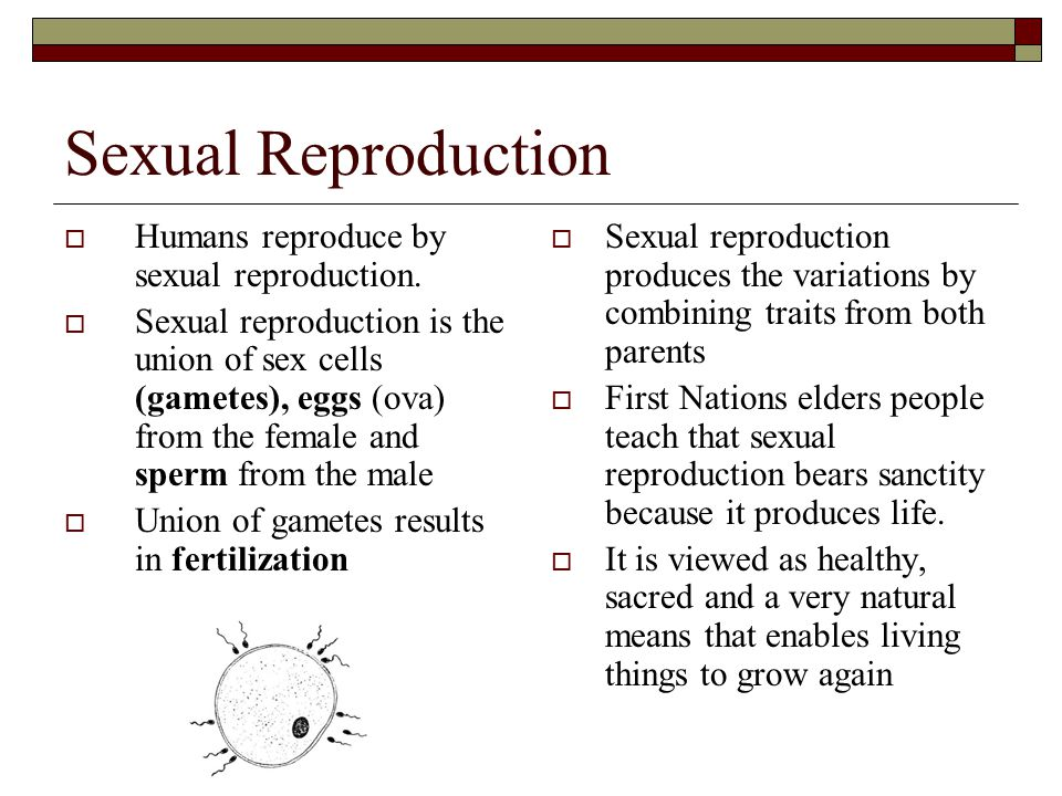 Summary of Male Hormone Control See page 489, Figure: 15.4