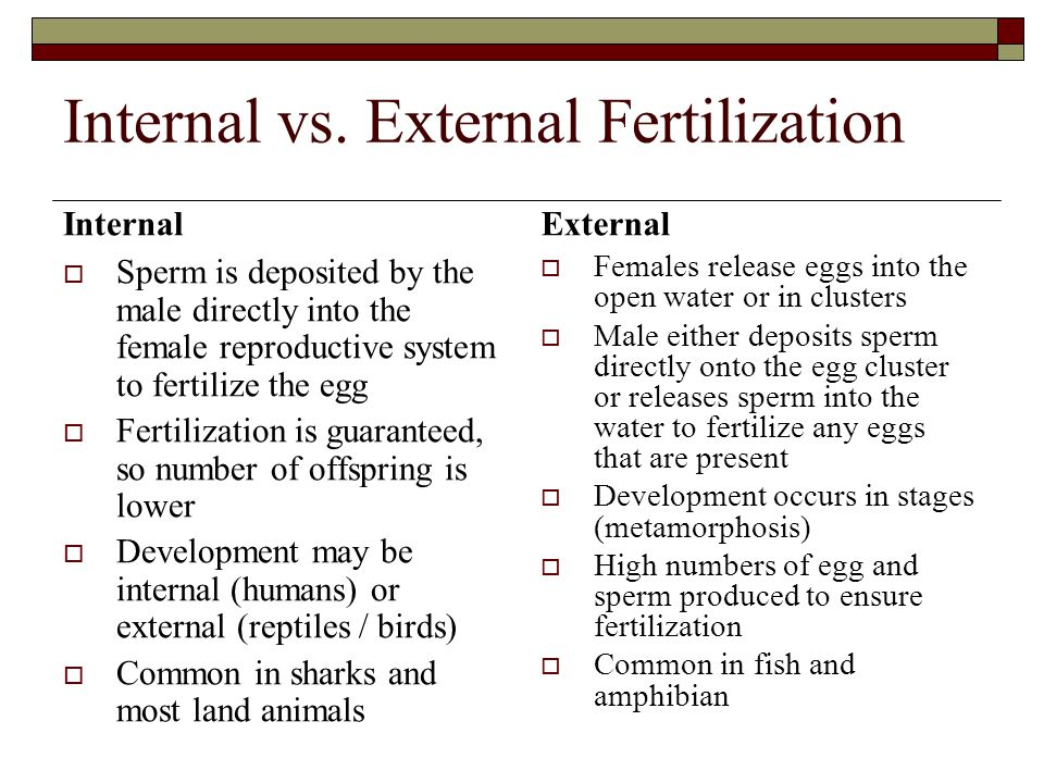 Internal vs. External Fertilization Internal External