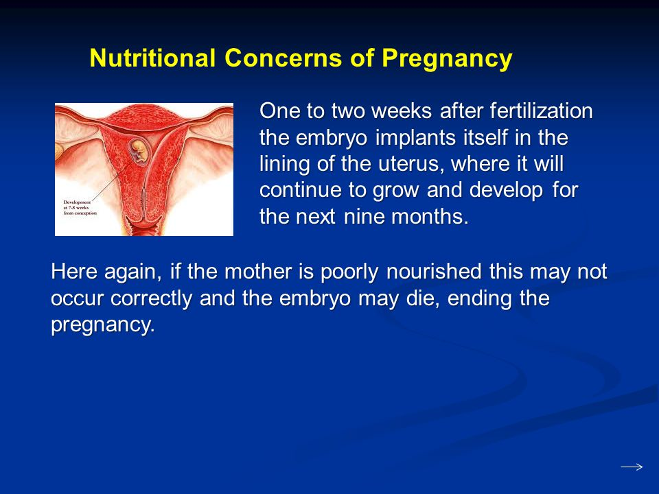 Nutritional Concerns of Pregnancy One to two weeks after fertilization the embryo implants itself in the lining of the uterus, where it will continue