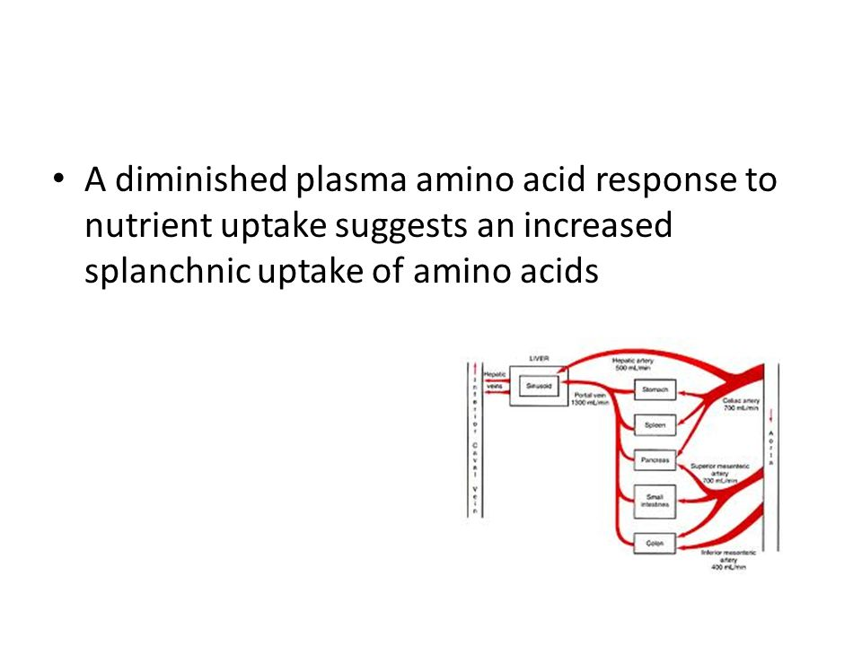 A diminished plasma amino acid response to nutrient uptake suggests an increased splanchnic uptake of amino acids