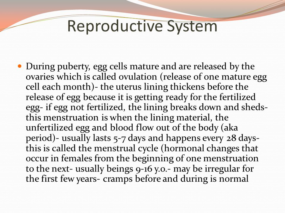 Reproductive System During puberty, egg cells mature and are released by the ovaries which is called ovulation (release of one mature egg cell each month)- the uterus lining thickens before the release of egg because it is getting ready for the fertilized egg- if egg not fertilized, the lining breaks down and sheds- this menstruation is when the lining material, the unfertilized egg and blood flow out of the body (aka period)- usually lasts 5-7 days and happens every 28 days- this is called the menstrual cycle (hormonal changes that occur in females from the beginning of one menstruation to the next- usually beings 9-16 y.o.- may be irregular for the first few years- cramps before and during is normal