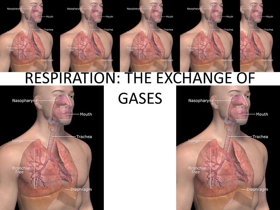 RESPIRATION: THE EXCHANGE OF GASES SMOKING IS ONE OF THE DEADLIEST ASSAULTS ON OUR RESPIRATORY SYSTEM – INCREASED RISK OF LUNG CANCER – EMPHYSEMA LOSS OF LUNGS ELASTICITY, REDUCTION OF GAS EXCHANGE DUE TO LOSS OF ALVEOLI