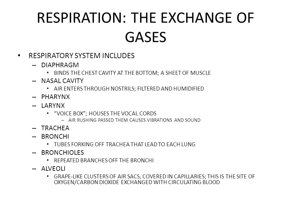 RESPIRATION: THE EXCHANGE OF GASES RESPIRATORY SYSTEM INCLUDES – DIAPHRAGM BINDS THE CHEST CAVITY AT THE BOTTOM; A SHEET OF MUSCLE – NASAL CAVITY AIR ENTERS THROUGH NOSTRILS; FILTERED AND HUMIDIFIED – PHARYNX – LARYNX VOICE BOX ; HOUSES THE VOCAL CORDS – AIR RUSHING PASSED THEM CAUSES VIBRATIONS AND SOUND – TRACHEA – BRONCHI TUBES FORKING OFF TRACHEA THAT LEAD TO EACH LUNG – BRONCHIOLES REPEATED BRANCHES OFF THE BRONCHI – ALVEOLI GRAPE-LIKE CLUSTERS OF AIR SACS, COVERED IN CAPILLARIES; THIS IS THE SITE OF OXYGEN/CARBON DIOXIDE EXCHANGED WITH CIRCULATING BLOOD