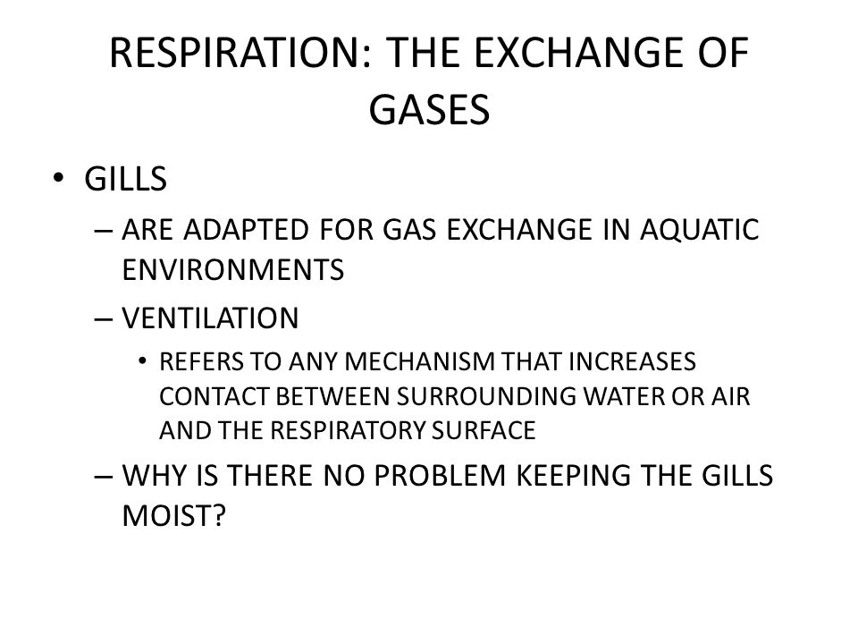 RESPIRATION: THE EXCHANGE OF GASES GILLS – ARE ADAPTED FOR GAS EXCHANGE IN AQUATIC ENVIRONMENTS – VENTILATION REFERS TO ANY MECHANISM THAT INCREASES CONTACT BETWEEN SURROUNDING WATER OR AIR AND THE RESPIRATORY SURFACE – WHY IS THERE NO PROBLEM KEEPING THE GILLS MOIST
