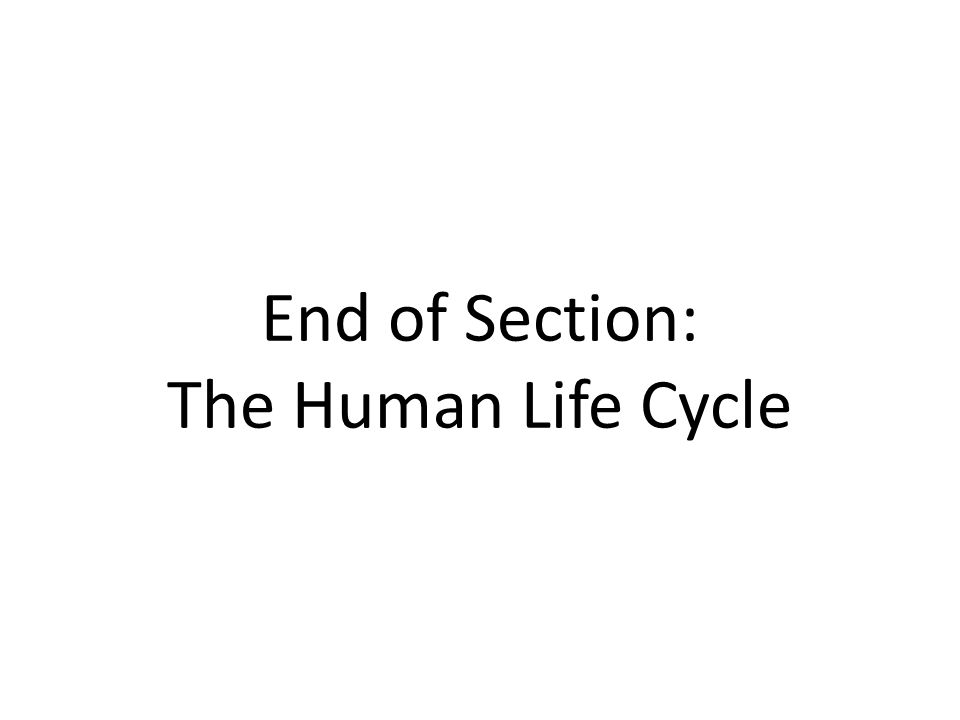 End of Section: The Human Life Cycle