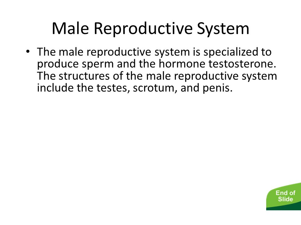 The Male and Female Reproductive Systems Male Reproductive System The male reproductive system is specialized to produce sperm and the hormone testost