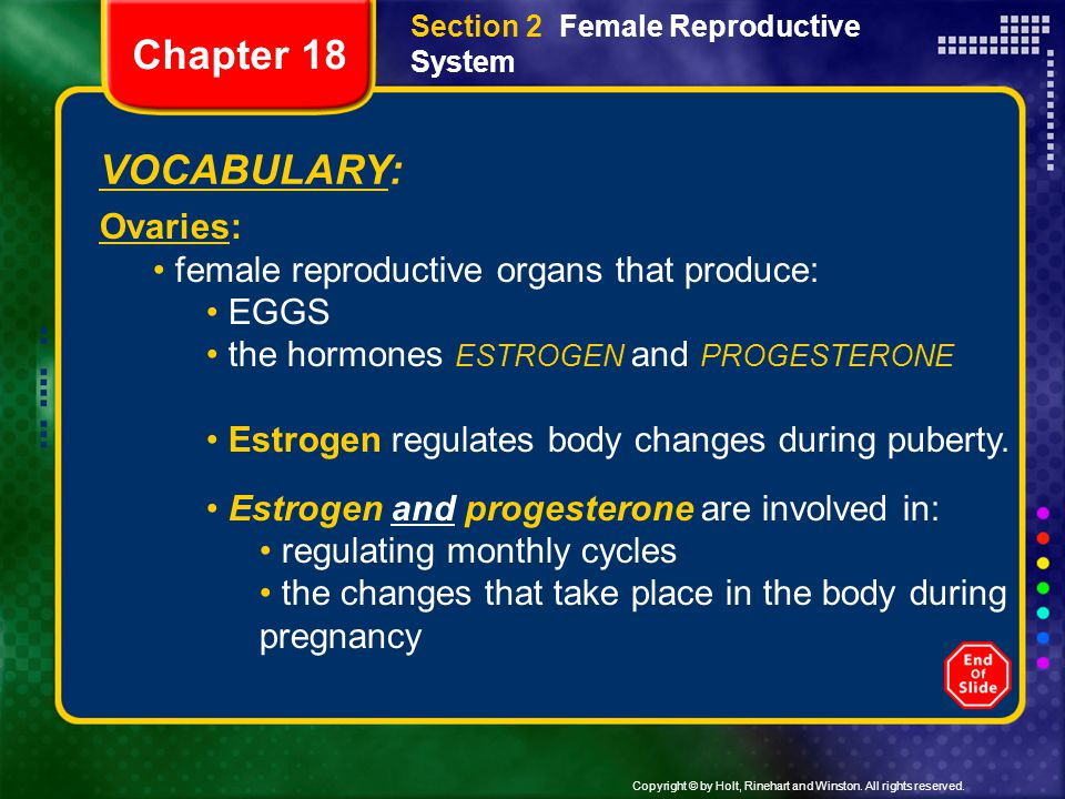 Copyright © by Holt, Rinehart and Winston. All rights reserved. VOCABULARY: Ovaries: female reproductive organs that produce: EGGS the hormones ESTROG