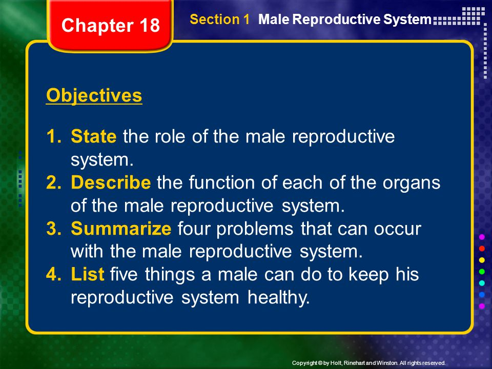 Copyright © by Holt, Rinehart and Winston. All rights reserved. Section 1 Male Reproductive System Objectives 1.State the role of the male reproductiv