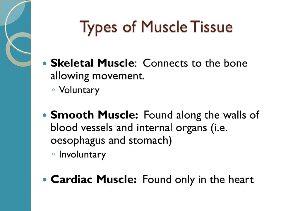 Types of Muscle Tissue Skeletal Muscle: Connects to the bone allowing movement.