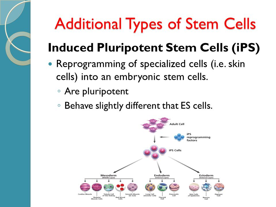 Induced Pluripotent Stem Cells (iPS) Reprogramming of specialized cells (i.e.