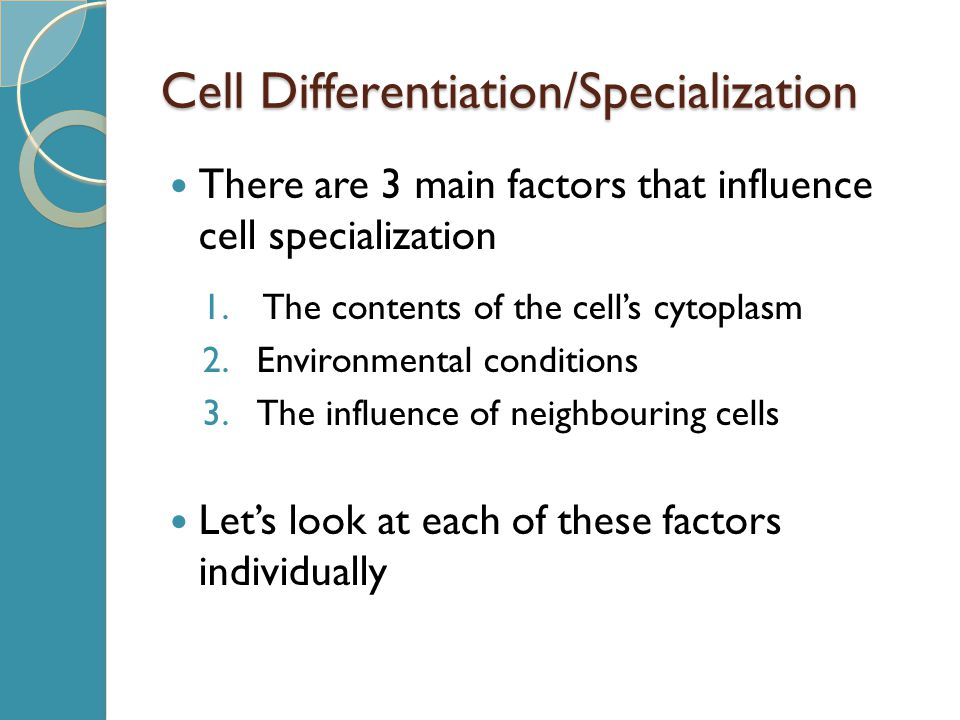 Cell Differentiation/Specialization There are 3 main factors that influence cell specialization 1. The contents of the cell's cytoplasm 2.Environmenta