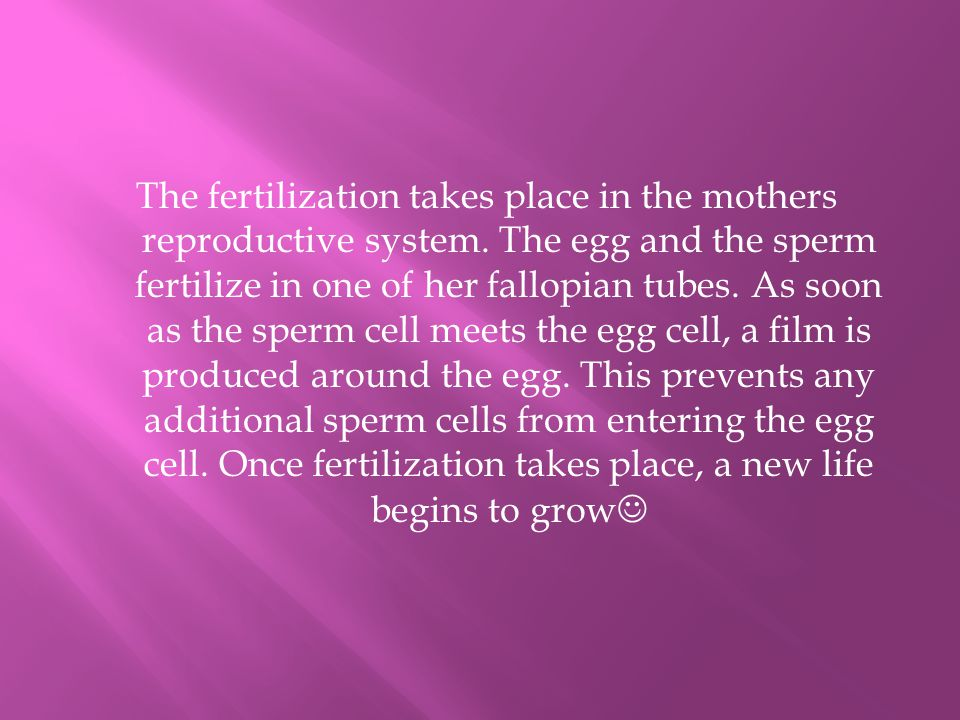 The fertilization takes place in the mothers reproductive system.