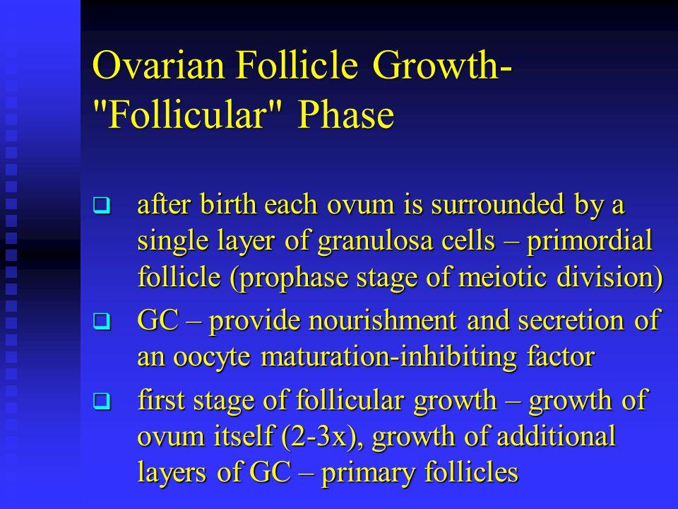 Ovarian Follicle Growth-