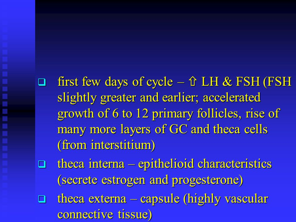  first few days of cycle –  LH & FSH (FSH slightly greater and earlier; accelerated growth of 6 to 12 primary follicles, rise of many more layers of GC and theca cells (from interstitium)  theca interna – epithelioid characteristics (secrete estrogen and progesterone)  theca externa – capsule (highly vascular connective tissue)