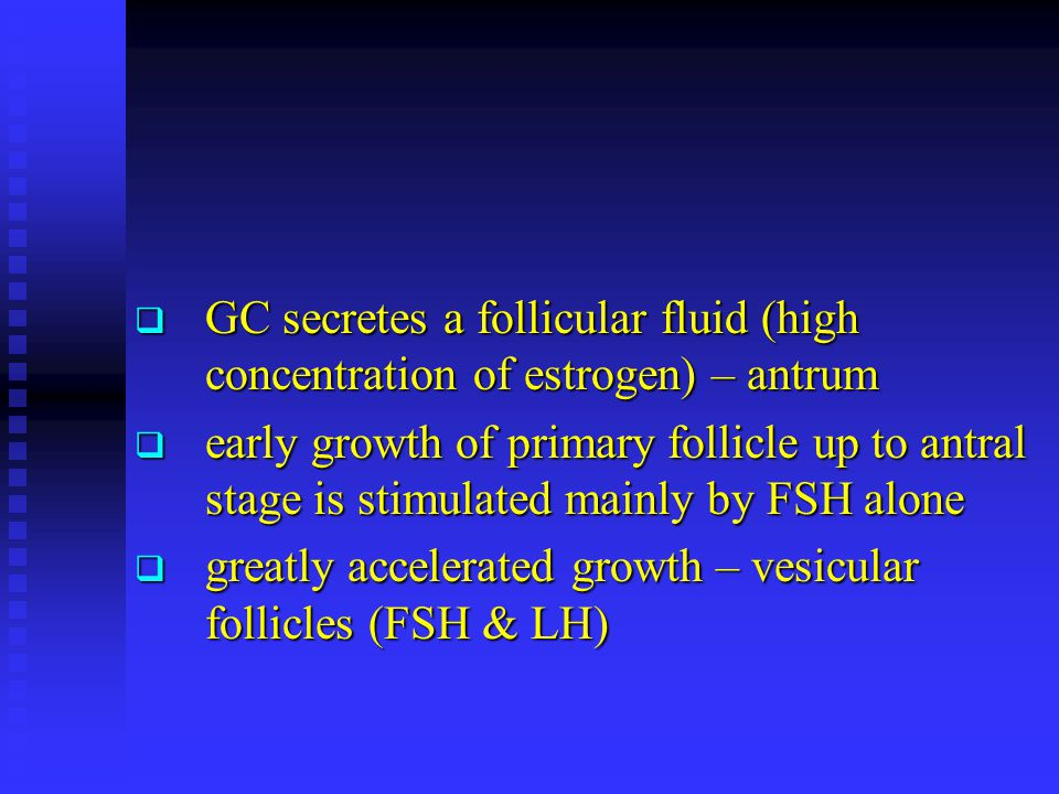  GC secretes a follicular fluid (high concentration of estrogen) – antrum  early growth of primary follicle up to antral stage is stimulated mainly by FSH alone  greatly accelerated growth – vesicular follicles (FSH & LH)