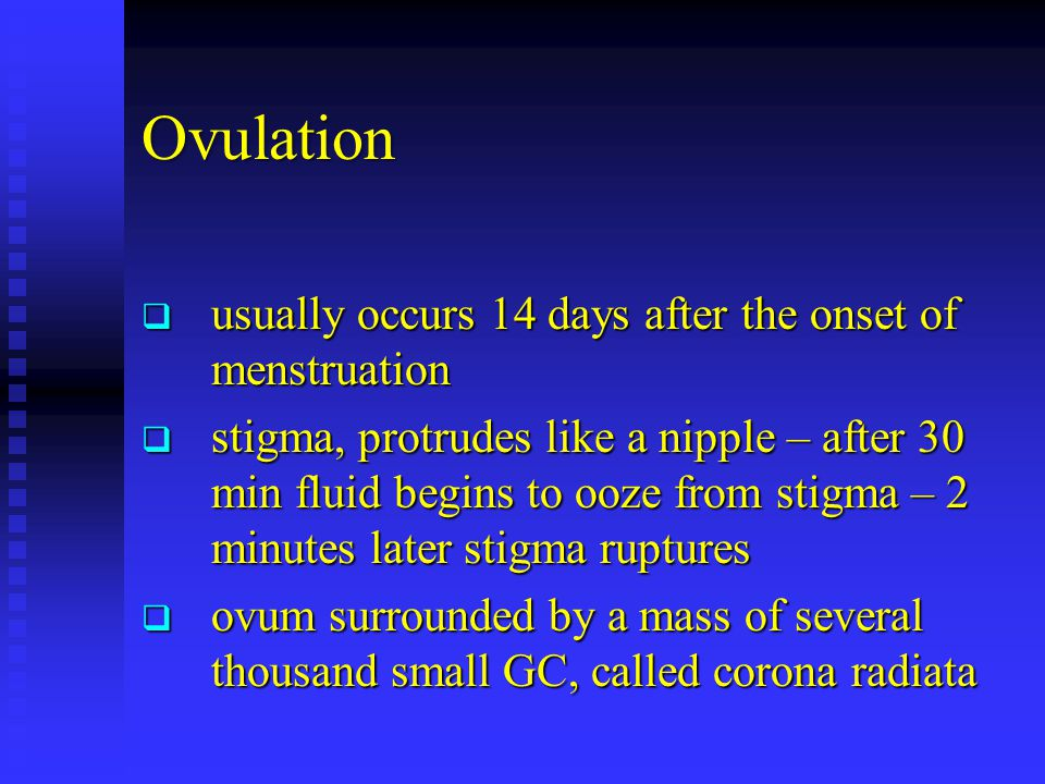 Ovulation  usually occurs 14 days after the onset of menstruation  stigma, protrudes like a nipple – after 30 min fluid begins to ooze from stigma – 2 minutes later stigma ruptures  ovum surrounded by a mass of several thousand small GC, called corona radiata