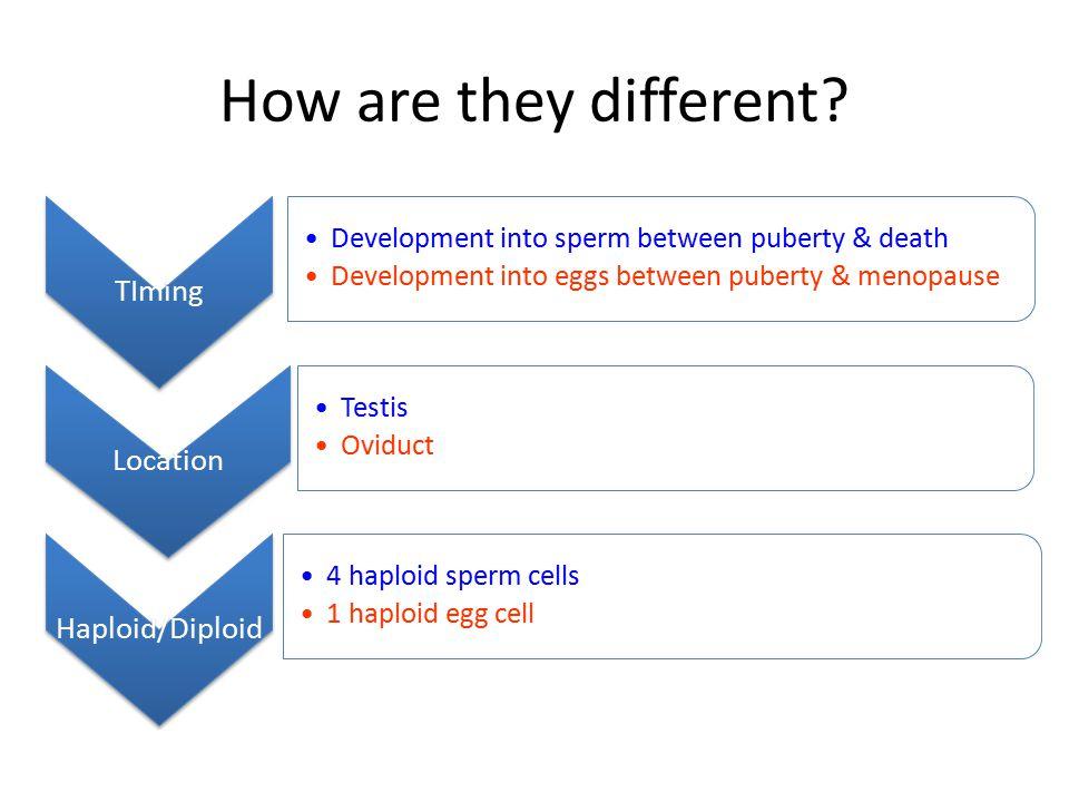 HCG When the blastocyst implants into the endometrium, it starts to release HCG hormone.