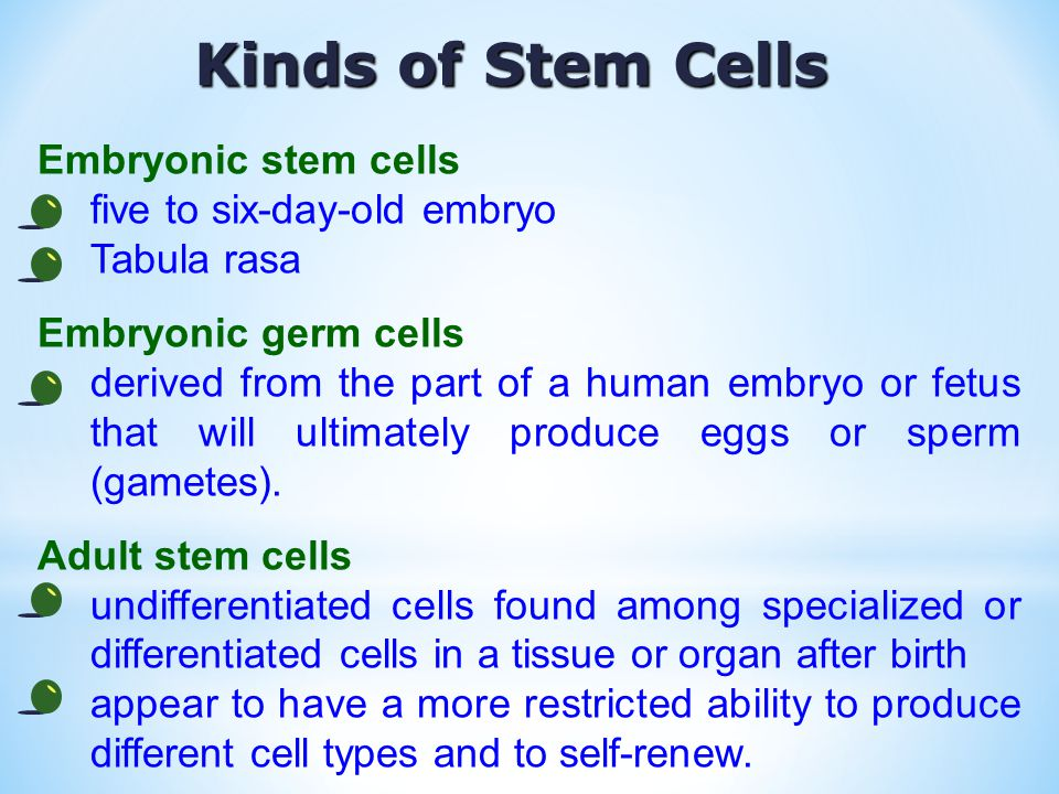 Kinds of Stem Cells Embryonic stem cells five to six-day-old embryo Tabula rasa Embryonic germ cells derived from the part of a human embryo or fetus that will ultimately produce eggs or sperm (gametes).