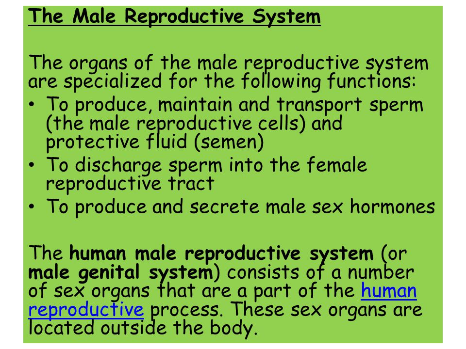 The Male Reproductive System The organs of the male reproductive system are specialized for the following functions: To produce, maintain and transpor