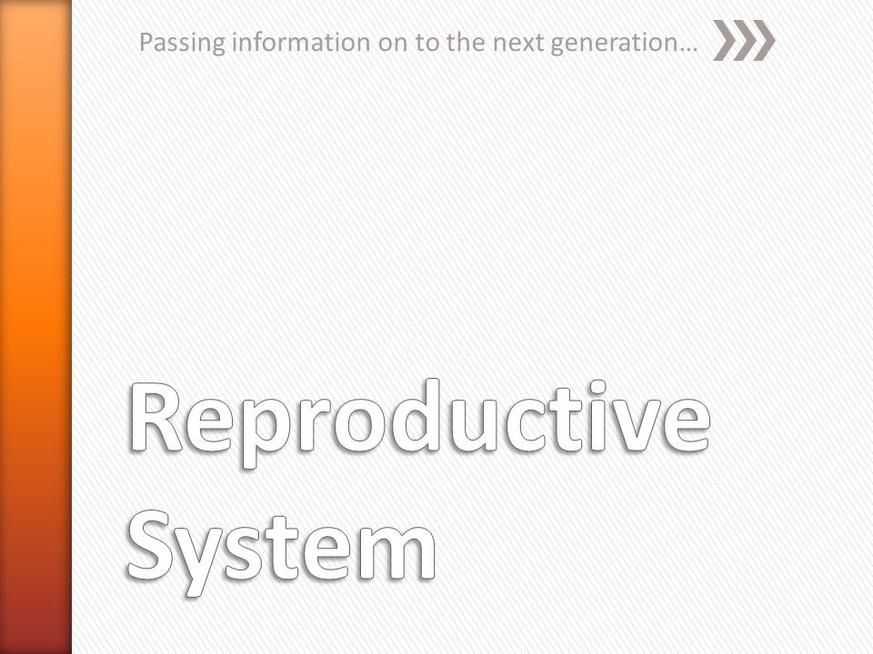Passing information on to the next generation…