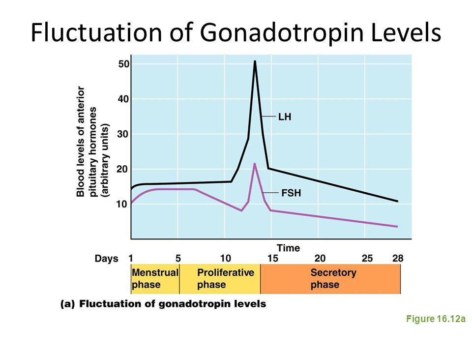 Fluctuation of Gonadotropin Levels Figure 16.12a