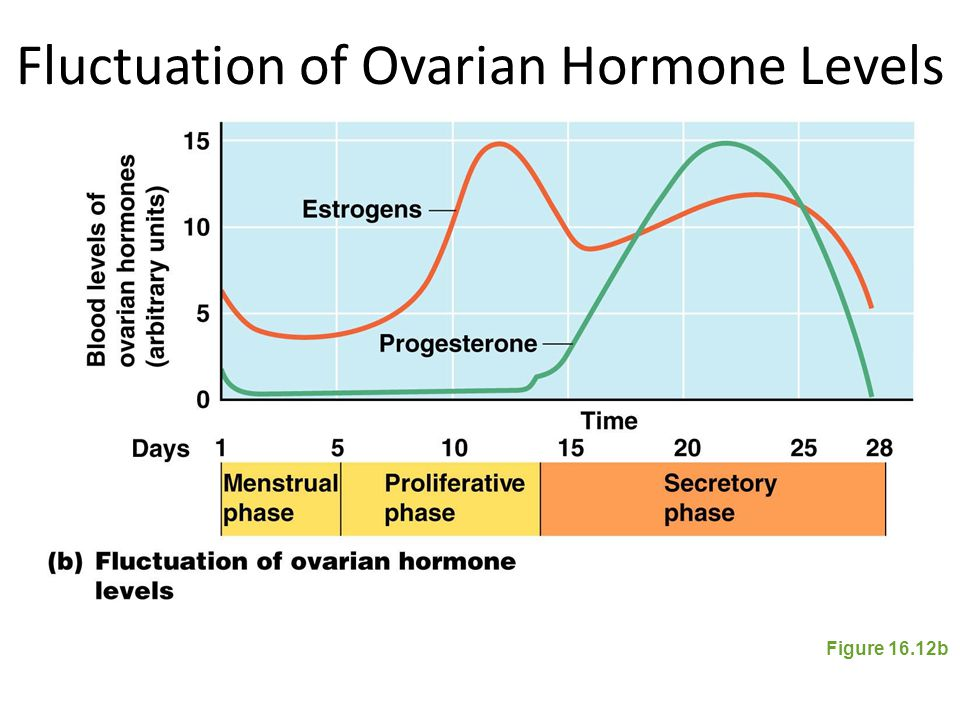 Fluctuation of Ovarian Hormone Levels Figure 16.12b