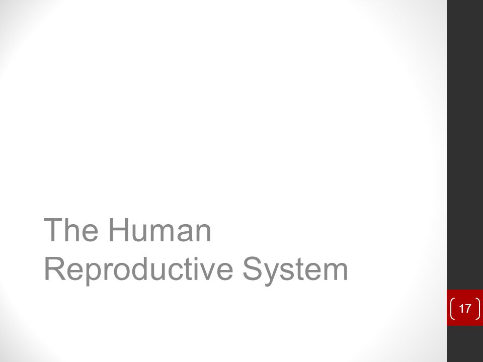 The Human Reproductive System 17